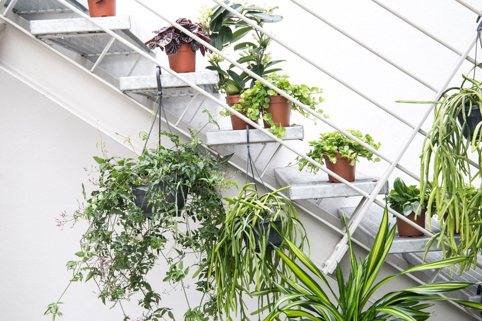 Eventbericht zum Interior-Workshop von Pflanzenfreude.de