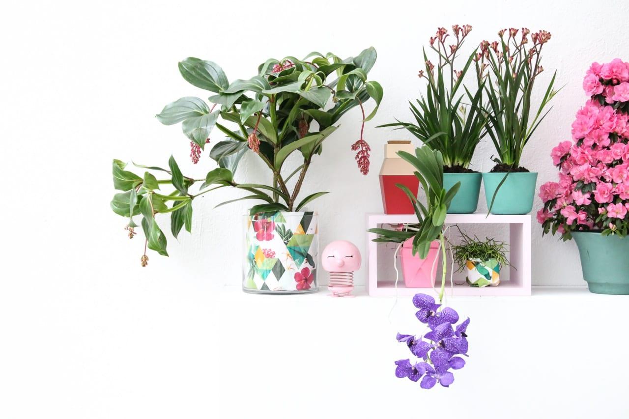 desbelleschoses-blog-köln-event-pflanzenfreude-workshop-interior-more-is-more 3