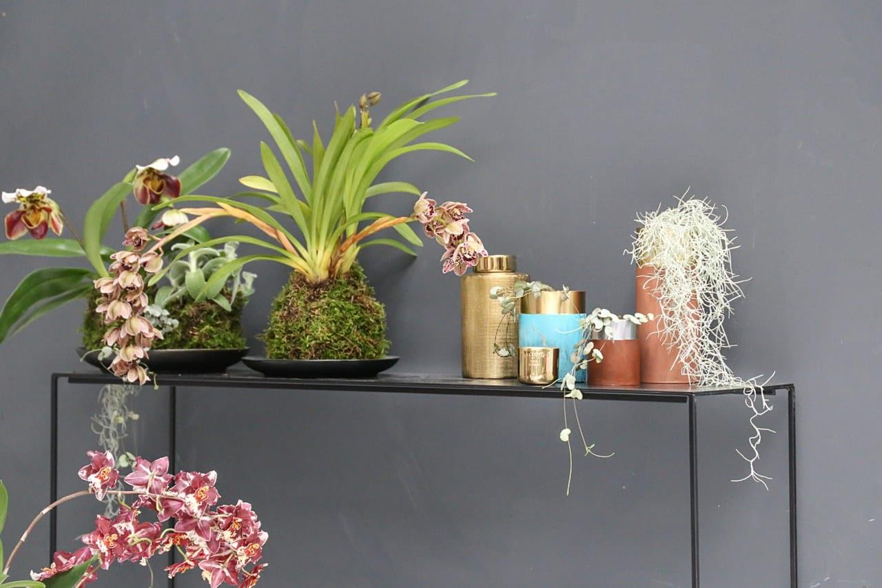 desbelleschoses-blog-köln-event-pflanzenfreude-workshop-interior-the-world-beyond 2