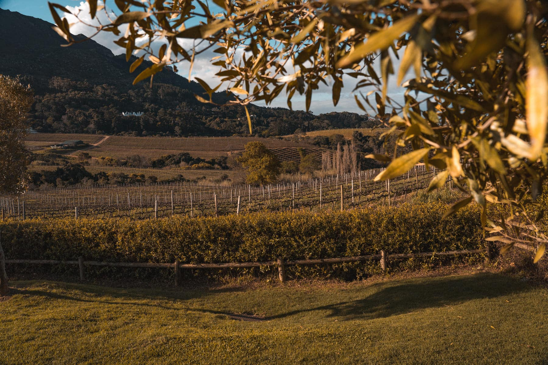 Garten Route Roadtrip - Weinprobe in Stellenbosch