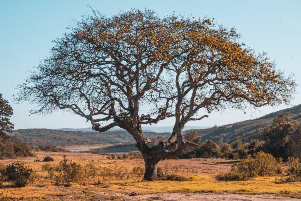 Garden Route Ausflüge von Kapstadt - Safaris, Touren & Unterkünfte