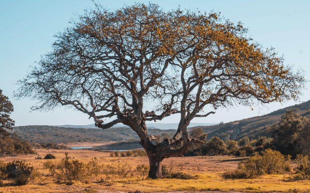Garden Route Ausflüge von Kapstadt – Safaris, Touren & Unterkünfte