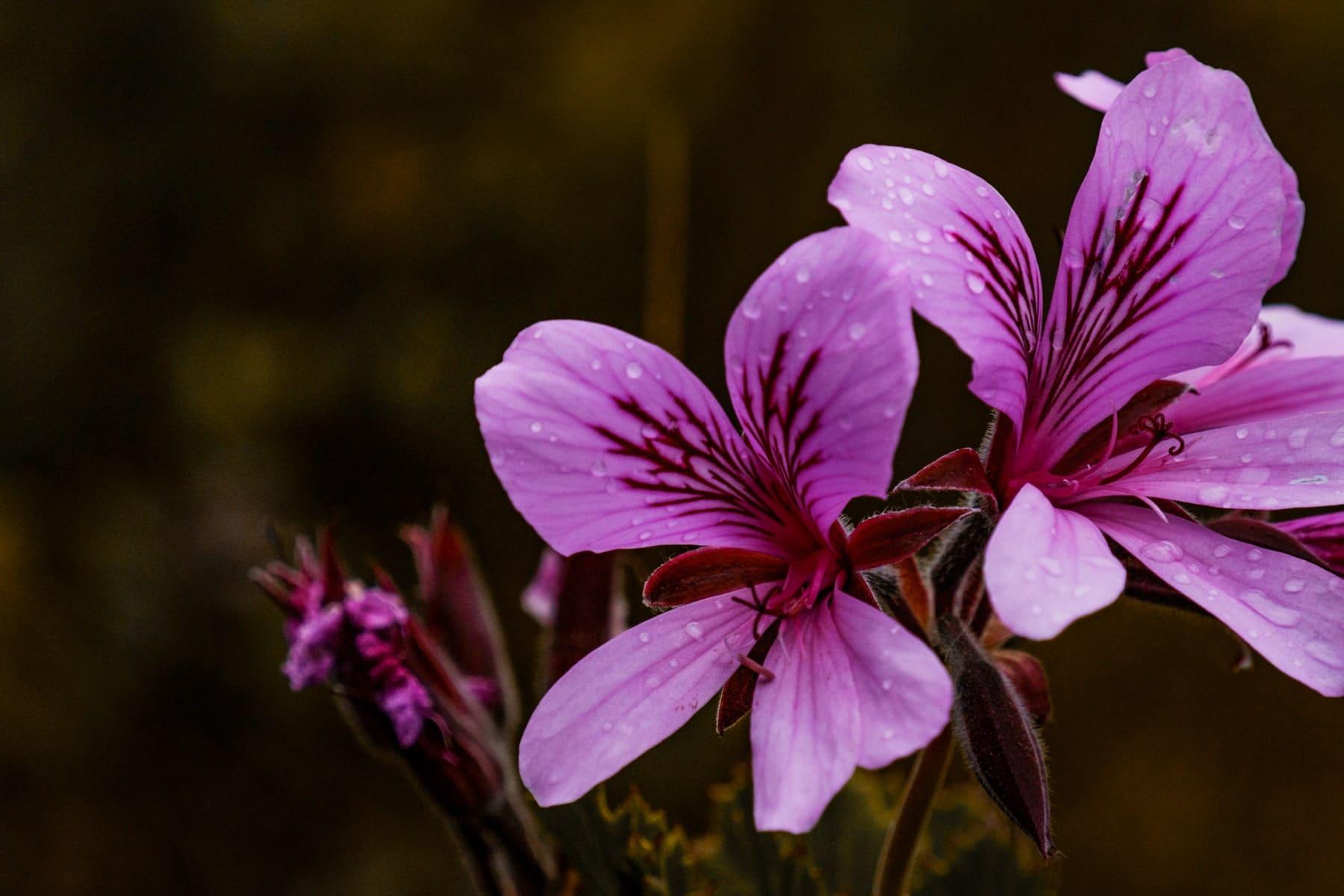 Südafrika Garden Route  für euren Roadtrip: Blumensafari im Grootbos Private Nature Reserve