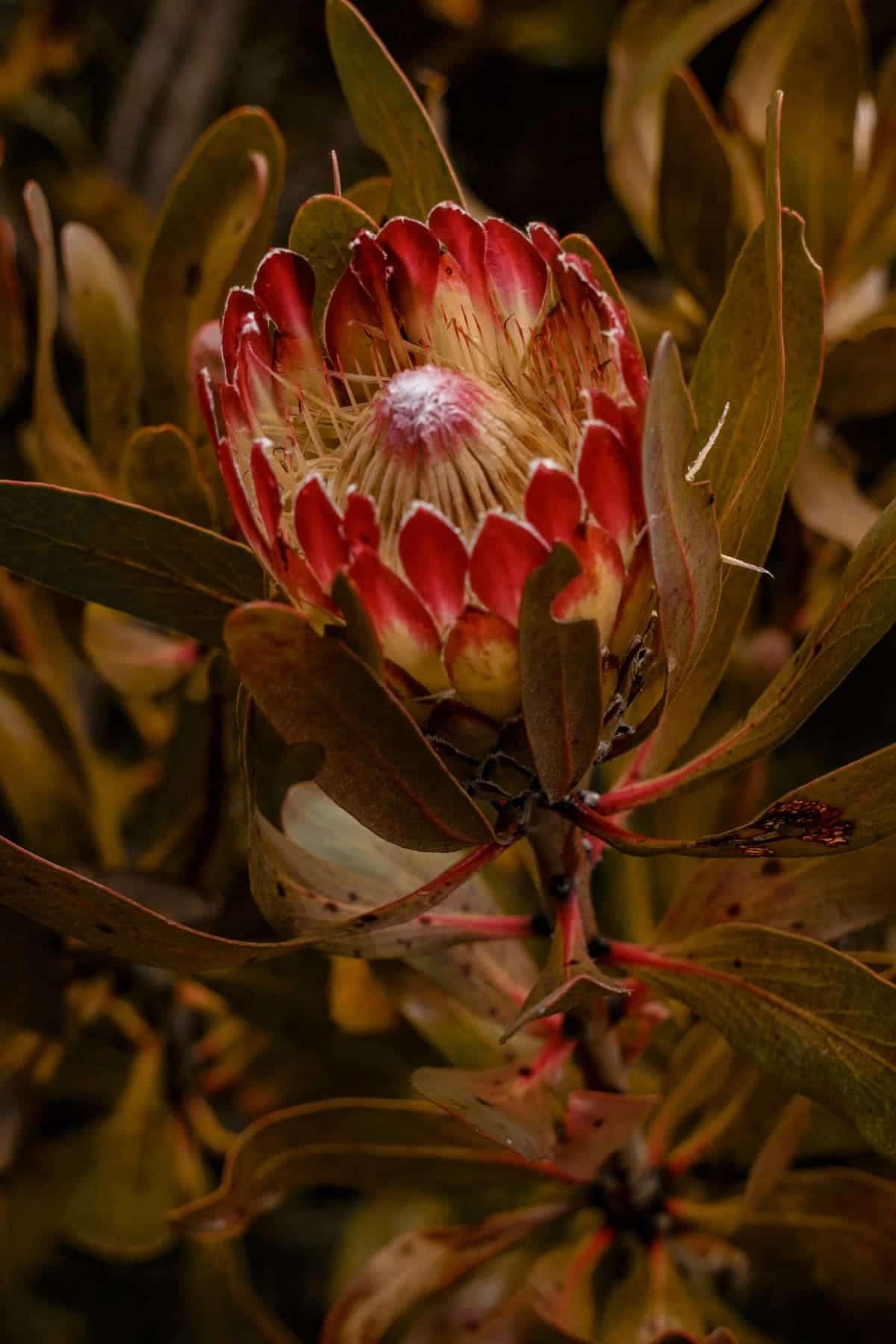 Garden Route Tipps für euren Roadtrip in Südafrika: Blumensafari im Grootbos Private Nature Reserve