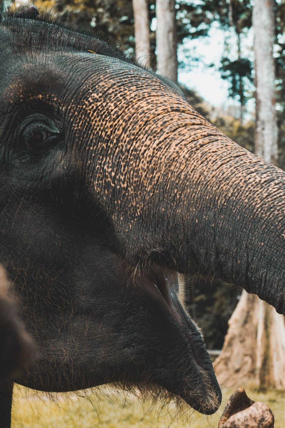 Malaysia Reisetipps - Kuala Gandah National Elephant Conservation Center