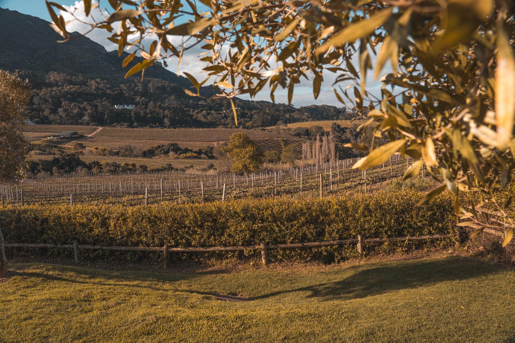 Kapstadt Tipps - Weinprobe in Constantia
