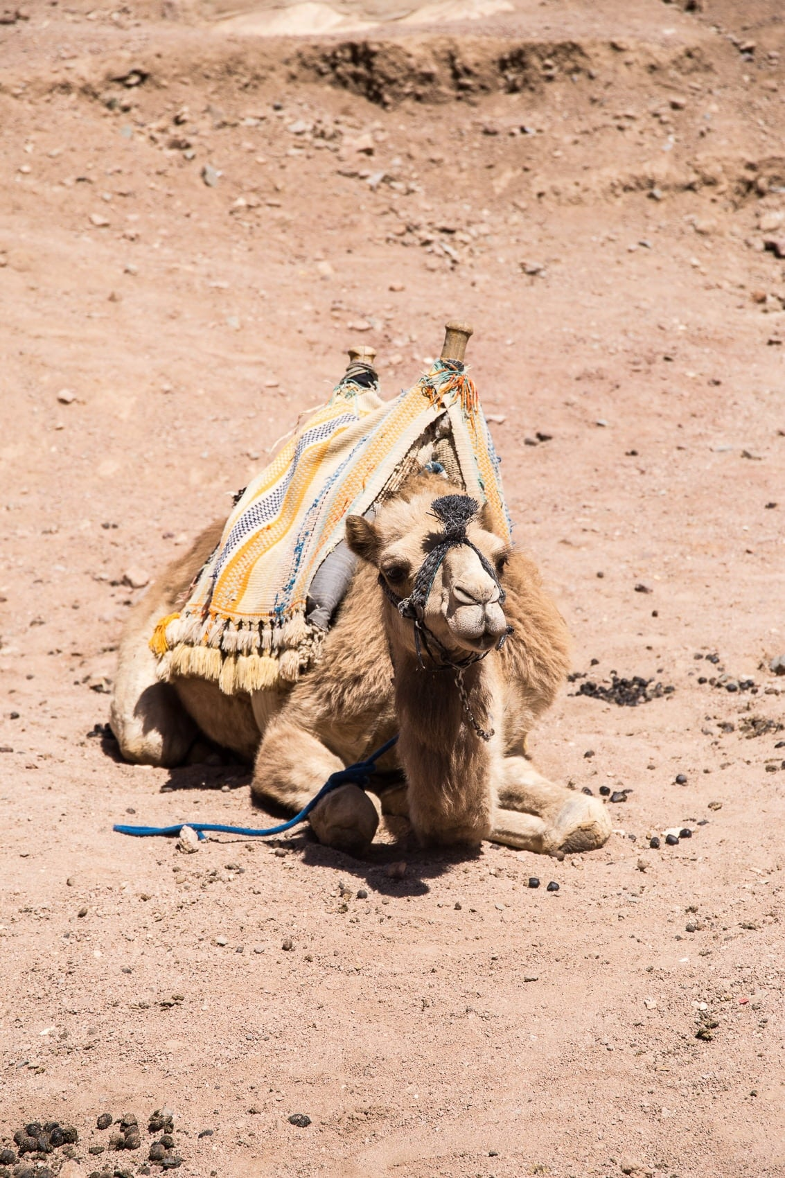 Royal Savoy Sharm El Sheikh - Urlaub im Taucherparadies