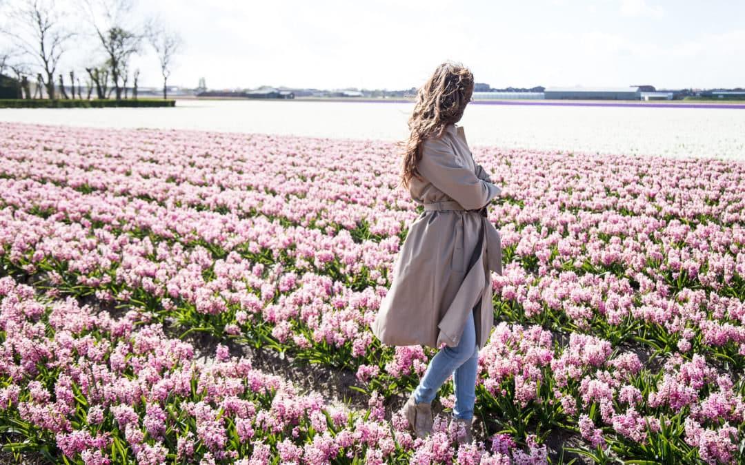 Entdecke die Tulpenblüte in Holland – Der Keukenhof in Lisse
