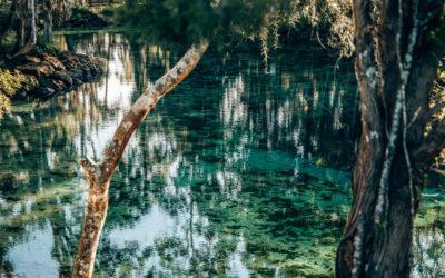 Florida Panhandle Rundreise - Schwimmen mit Manatees in Crystal River