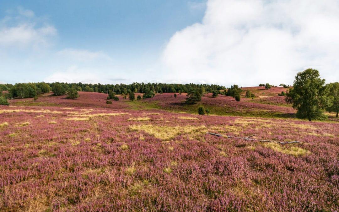 Urlaub in die Lüneburger Heide: 5 Tipps für deine nächste Reise